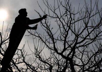 Obstbaumpflege bei Abendstimmung