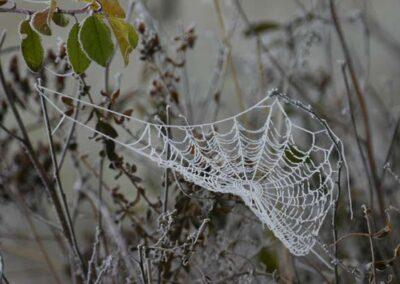 Spinnennetz im Raureif